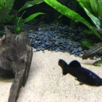 Aquarienkies Naturschwarz Rund 4-6mm 5 kg