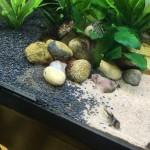 Aquarienkies Naturschwarz Rund 2-5mm 5 kg