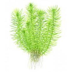 Tropica 1-2-Grow Pogostemon erectus